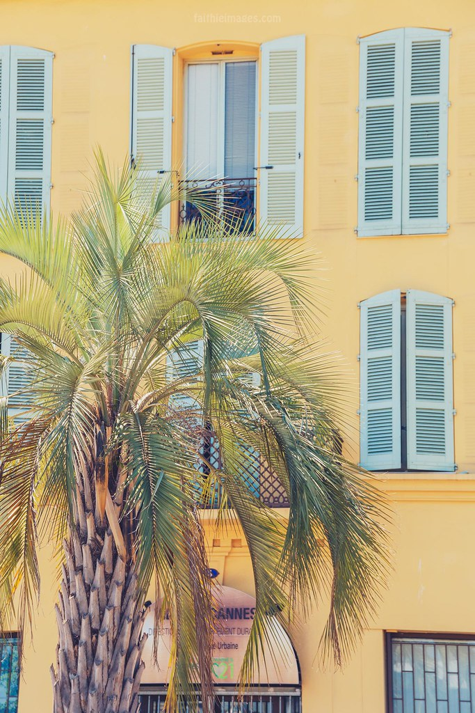 Palm tree and yellow blue house