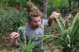 Do I look like a pineapple?? Finca Don Eduardo coffee farm, Salento
