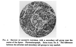 Fig. A from V.D. Harris and W.J. Gow, 'Note upon one or two points in the Comparative Histology of the Pancreas', Journal of Physiology 15 (4) (1893), pp. 349-360. On p. 353.
