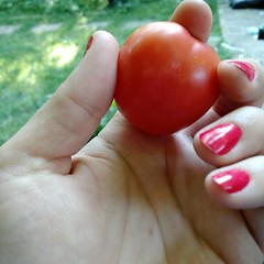 Image by EvyWellsCresencia (evywells) and image name Big fat pearly pink cherry tomato! #grewitmyself photo