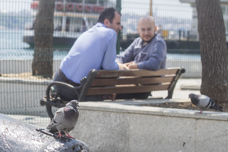 Pigeon - Square in Ortakoy, Istanbul