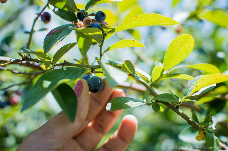 Blueberry Hills Farm Texas