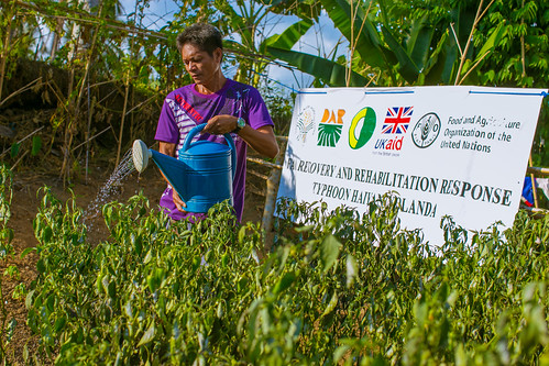 Building more resilient farming communities after Typhoon Haiyan - Philippines