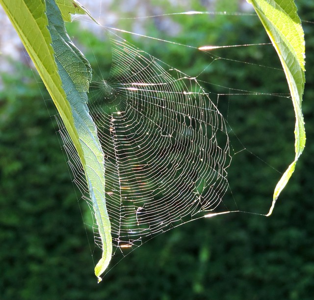 catching colour in a web