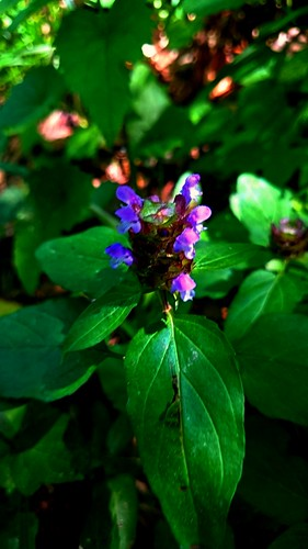 flower nature forest hungary szekszárd tolnamegye