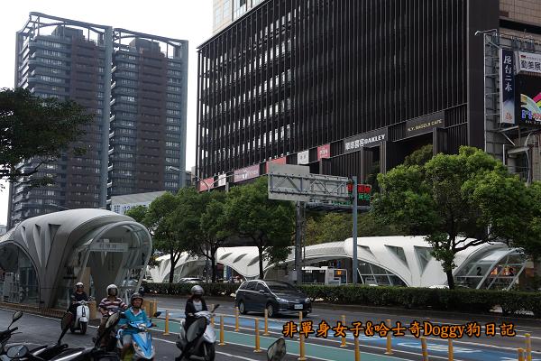 台中秋紅谷30