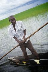 Zambian man rowing on  pirogue, Barotse Floodplain to Lealui Island, Barotseland, Zambia