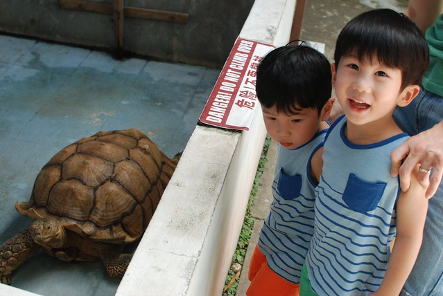 Jerry excited to see the huge Sulcata Tortoise.