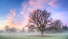 159/365v3 – As The Mist Rises