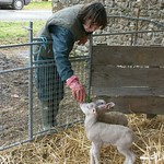 Ruth with orphan lambs