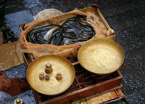anguille (eels)