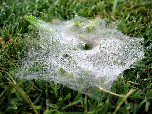 Morning Dew on Grass Spider Web 6AM