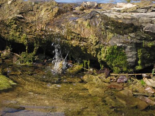 2005 fossils devoniangorge