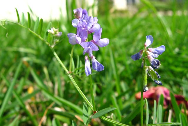 Grass Flowers Flickr Photo Sharing