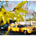 When the Taxicabs are in Full Bloom