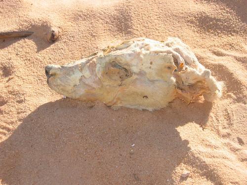 geotagged libya libye 20060327 geolat258718333333333 geolon139011666666667
