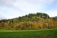 Autumn landscape VI