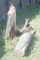 tree stump, wood, tree, trunk,