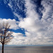 Tree Over Erie by aprevite