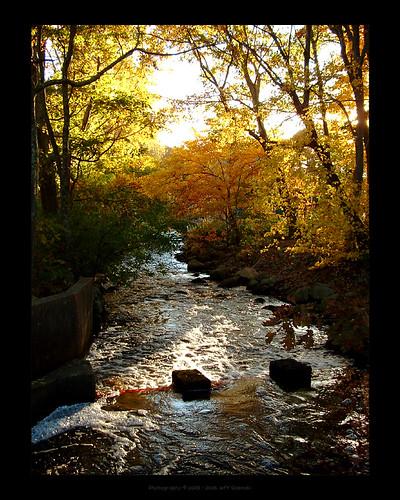 orange water leaves yellow pine creek forest river woods rocks run foliage brook needles herring