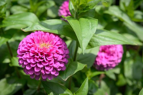 FilipWolak-LSBID-Gardens-8319