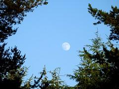 Moon Chasing Sun