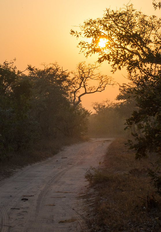 Sabi Sands...the road to happiness
