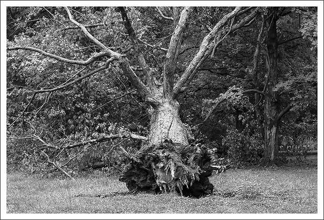If A Tree 2