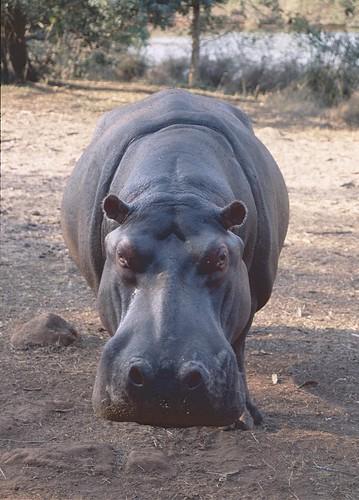 Swaziland 2006