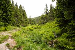 Hiking to Snezka: Svaty Petr Valley