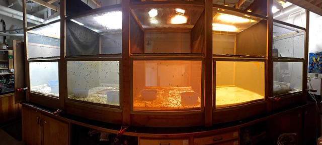 Photo of Black Soldier Fly Hatchery