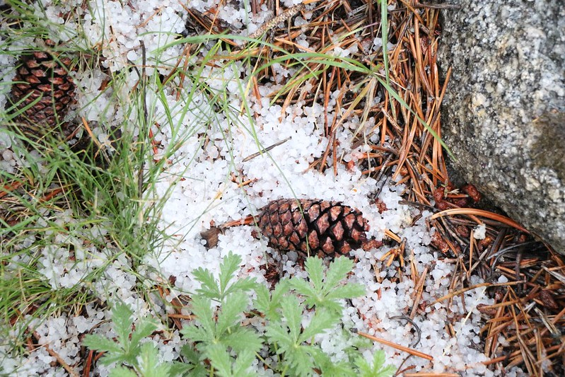 A pile of Hailstones amid pine needles and pine cones.