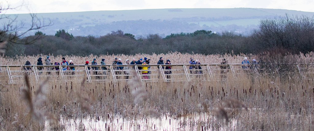 birdwatchers in a row - Click to show full size