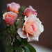 House roses by Deirdre Snook - catching up after a hectic summer