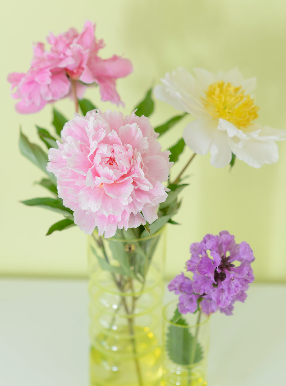 Peonies and stachys from our backyard