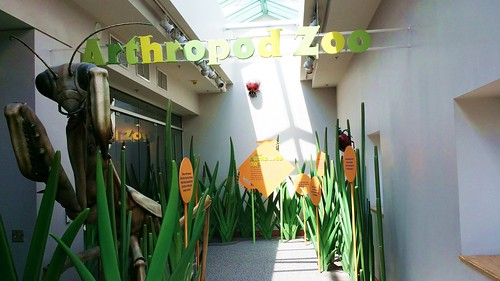 The arthropod zoo in the North Carolina Museum of Natural Science