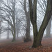 A Foggy Day in Sherwood by PeteZab