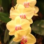 Orchideengarten im Changi Airport Singapur (4)