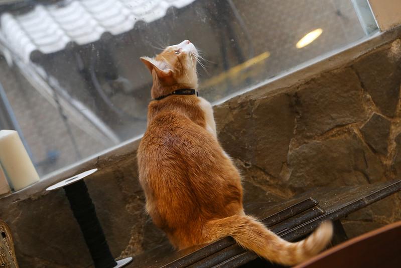 IM咖啡台北Toast Chat推薦有貓咪咖啡館Toast Chat不限時間消費Toast Chat營業時間Toast Chat地址早午餐咖啡館台北市咖啡廳捷運國父紀念館站