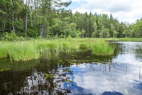 lake reed landscape sweden schweden shore sverige scandinavia östergötland sommen östergötlandslän torpön