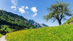 Suisse nature