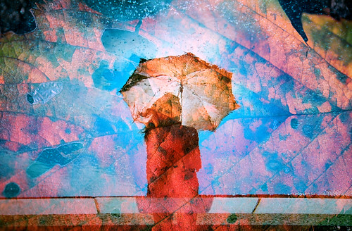 雨上がりの原色たち -color palette after rain por Hodaka Yamamoto
