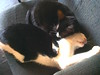 Gatos a dormir 6 Jun 2015