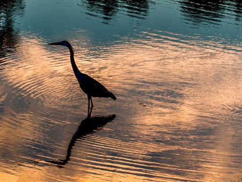 blue sunset orange lake reflection water birds animals silhouette river waves shadows