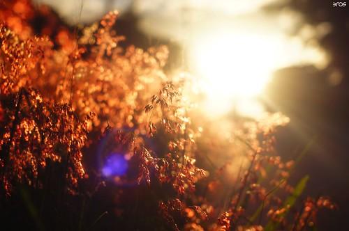 sunset sun love sonya55