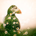 Puffin - Double Exposure by elliot.hook