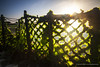 The Seaweed Farm