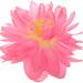 Pink Lotus Flower on white - DD0A5607-1000 by Bahman Farzad