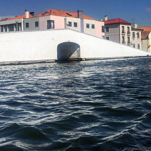 on the water in a moliceiro #aveiro