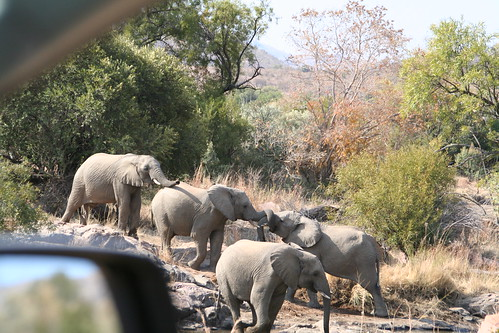 Elephants on the other side of the car